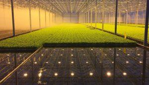 Львовский фермер ООО «Галиция Гринер» привлек 600 тыс. евро европейских инвестиций